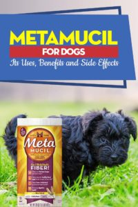 Guide on Metamucil for Dogs Its Uses, Benefits and Side Effects