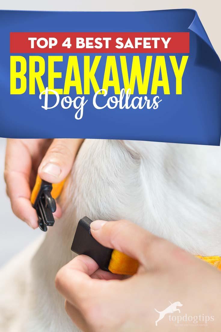 Top 4 Best Safety Breakaway Dog Collars