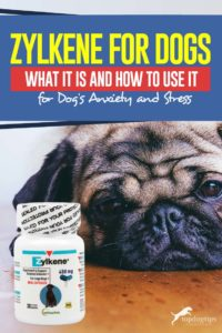 Zylkene for Dogs - What It Is and How to Use It for Dog's Anxiety and Stress