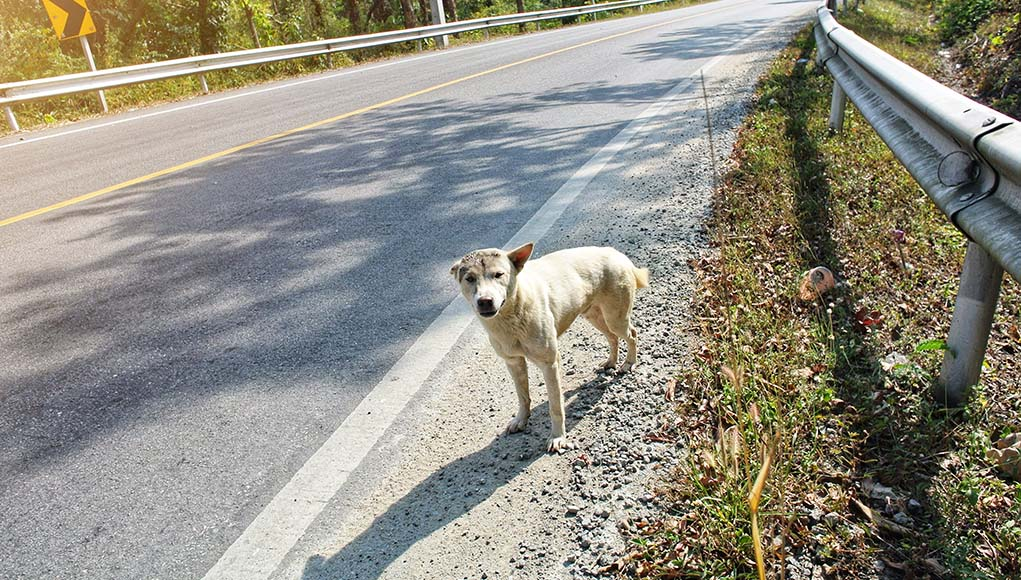 12 Things to Do When You Find an Abandoned Dog