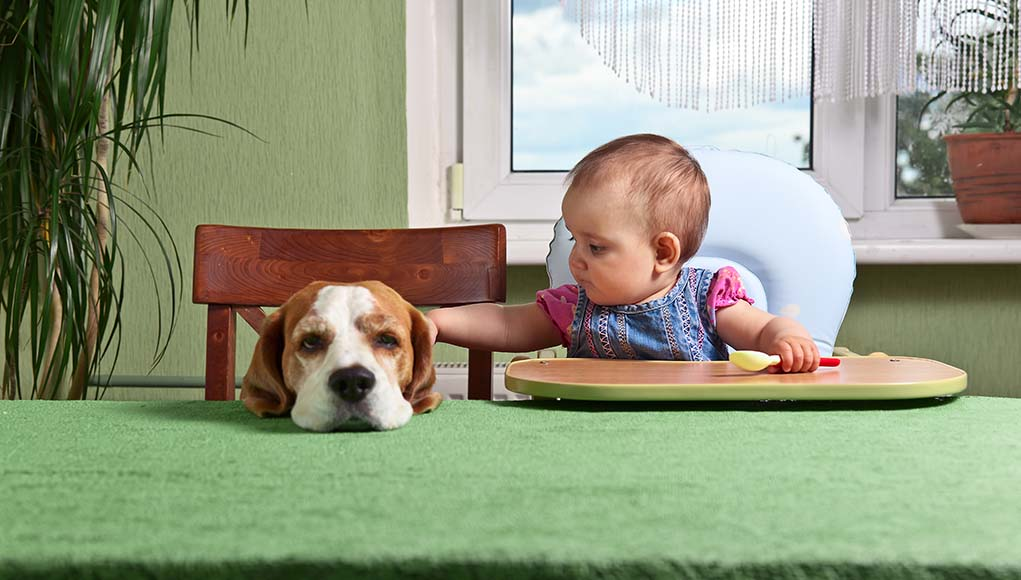 12 Tips for Introducing a Toddler to a Dog