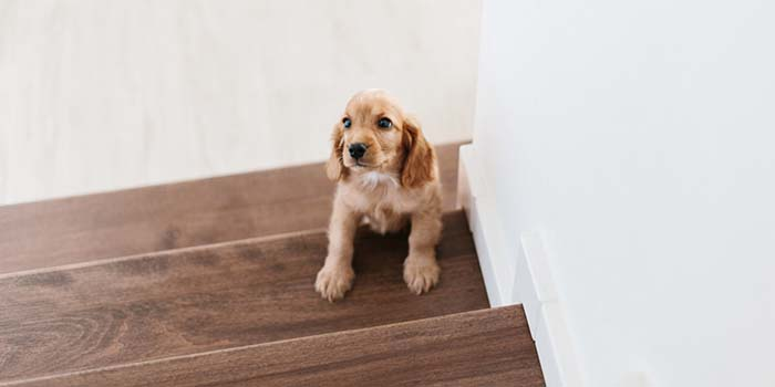 6 Stair Safety Tips for Dogs