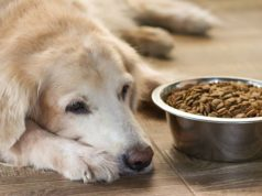Low Protein Diet for Dogs - The Ultimate Guide