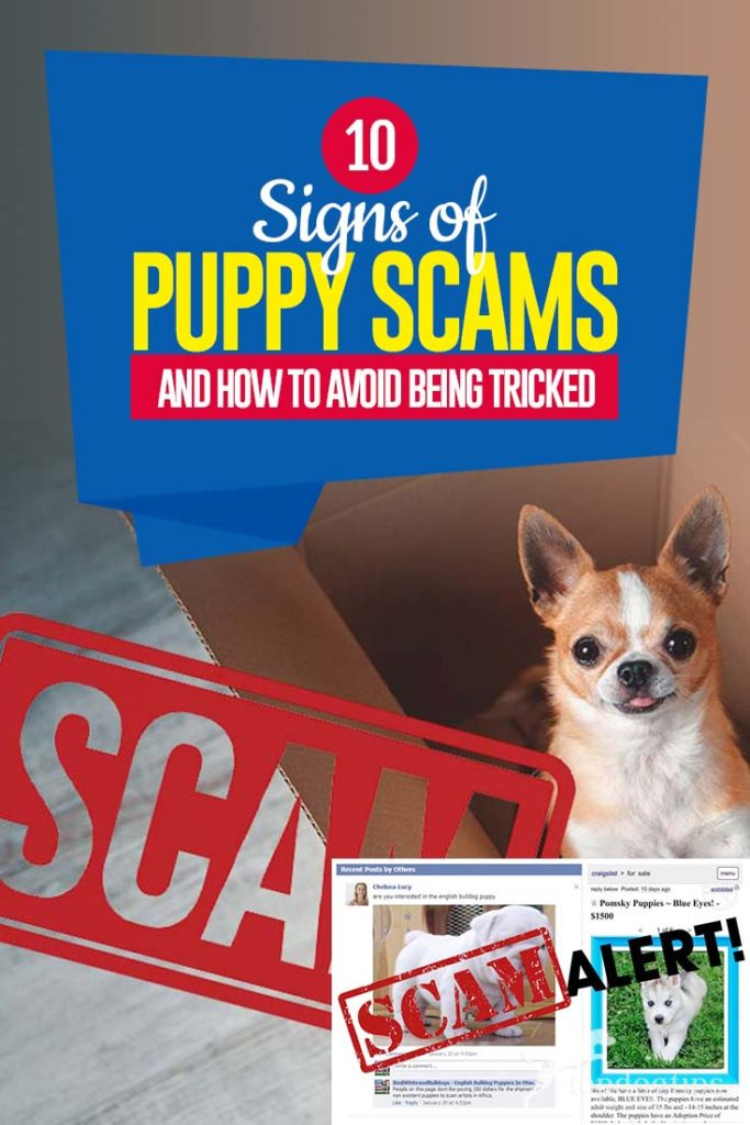 The 10 Signs of Puppy Scams (And How to Avoid Being Tricked)