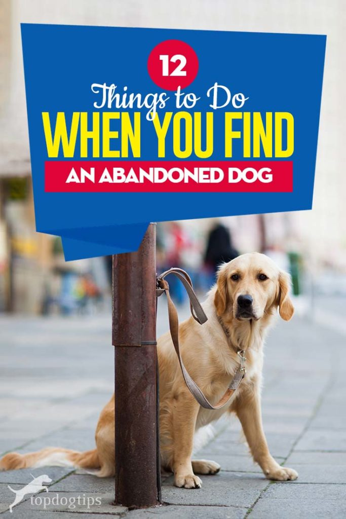 The 12 Things to Do When You Find an Abandoned Dog