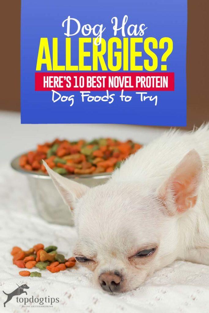 Top 10 Best Novel Protein Dog Foods