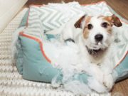10 Ways to Stop Your Dog from Chewing Bed