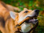 8 Items Dogs Choke On Most Often