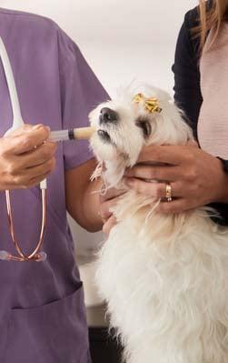 Before You Begin Syringe Feeding Your Dog