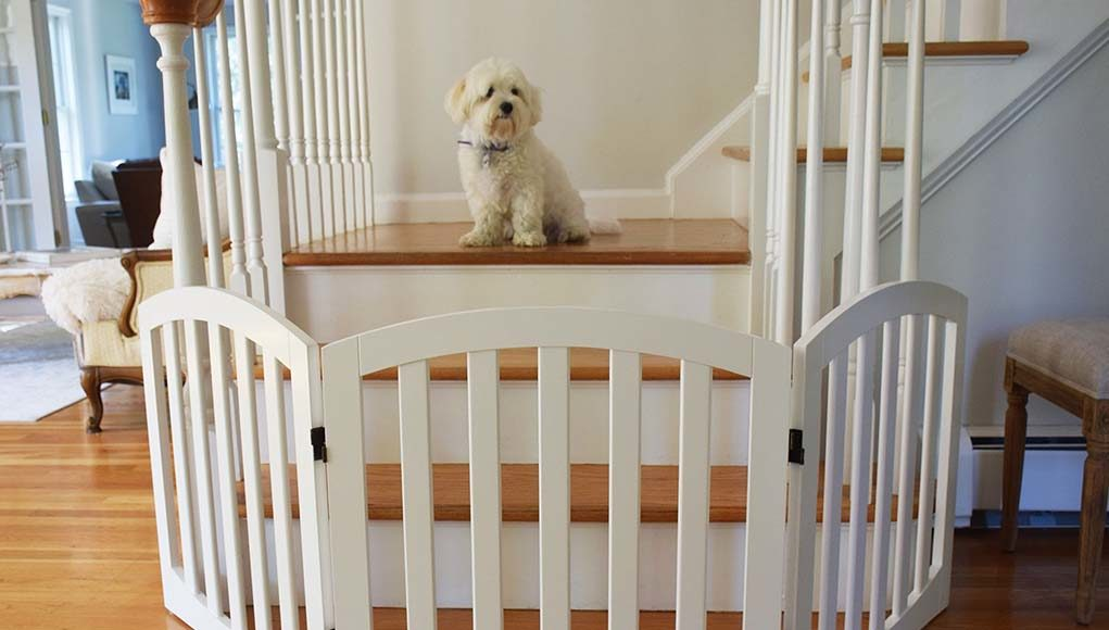 Best Dog Gates for Stairs
