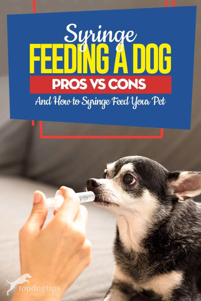 Guide on Syringe Feeding a Dog