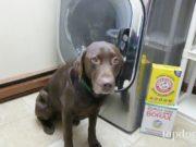 dog and washing machine