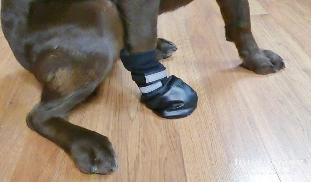 dog wearing boot