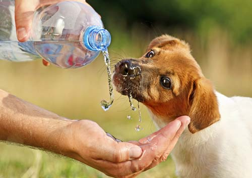 Do's and Don't if a Dog is Drinking a Lot of Water