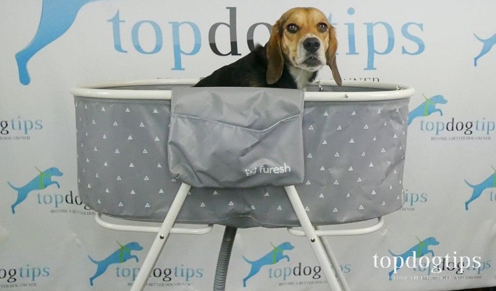 Dog bath review