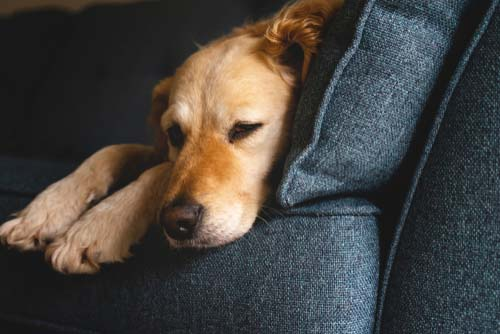 Keep Your Dog Stress-Free
