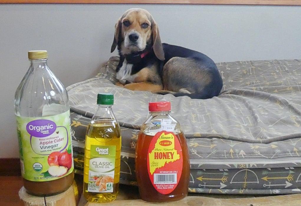 5 Best Dog Mange Home Remedies