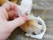 how to treat a dog wound