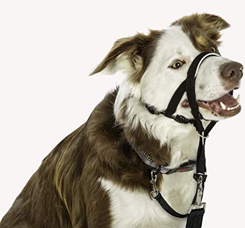 Halti Head Collar for Dogs