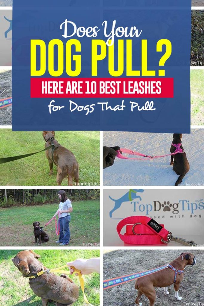 Best Rated Leashes for Dogs That Pull