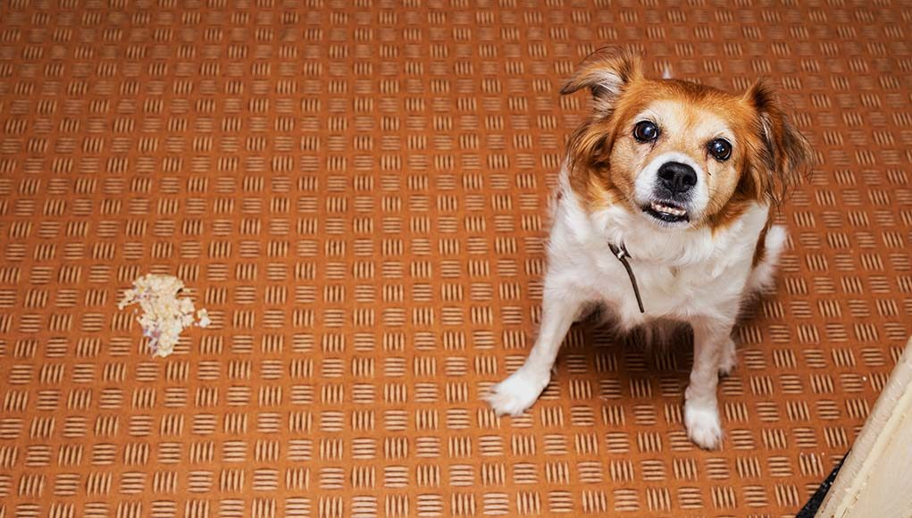 Dog Throwing Up White Foam 11 Most Common Reasons For This Issue,What Is An Ionizer Do