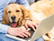 How to Turn Your Dreams Into a Successful Pet Business