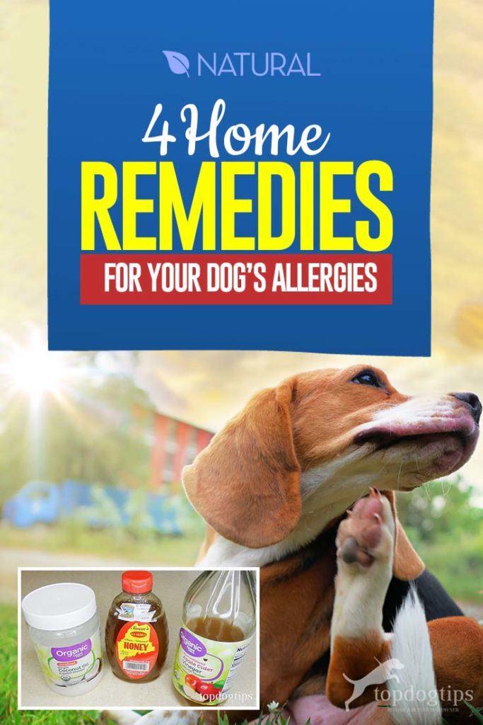 Top 4 Home Remedies for Dog Allergies