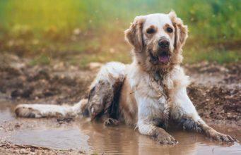 Ways to Make Your Dog Always Smell Fresh