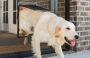 5 Best Storm Doors with Dog Doors