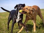 5 Safest Tennis Balls For Dogs