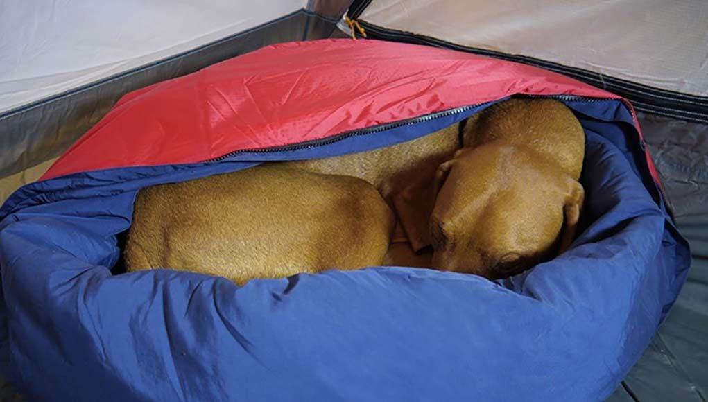 Best Dog Sleeping Bags