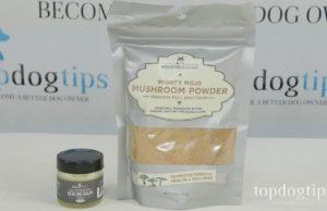 mushroom powder for dogs