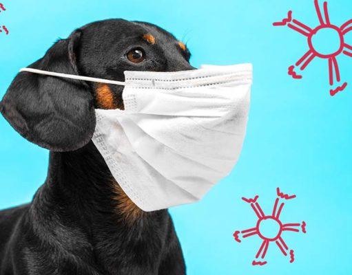 11 Most Dangerous Viruses in Dogs