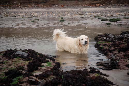 Cryptosporidiosis in dogs