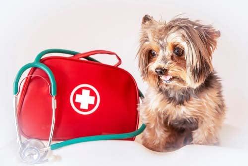 Prepare an Emergency Kit