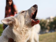 My 6 Best Aggressive Dog Training Tips (And What Not To Do)