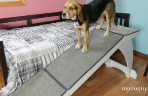 PetSafe CozyUp Bed Ramp