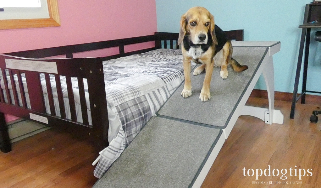 PetSafe CozyUp Bed Ramp for Dogs Review