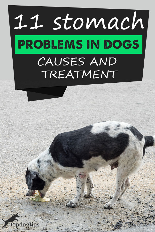 11 Stomach Problems In Dogs