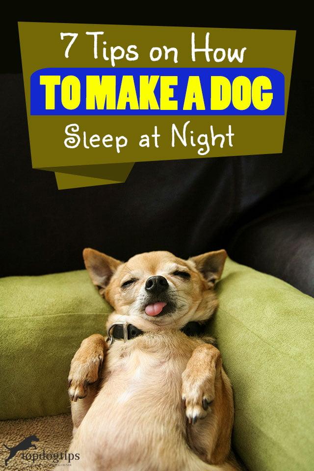 Tips On How To Make A Dog Sleep At Night