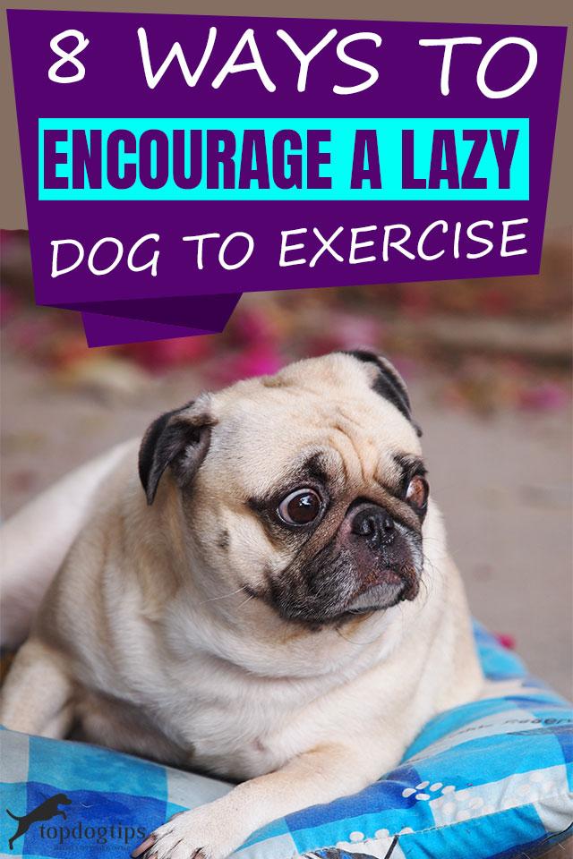 Ways To Encourage A Lazy Dog To Exercise