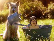 9 conseils pour présenter les tout-petits aux chiens