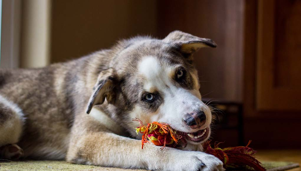 Best Things for Dogs to Chew On