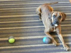 PetSafe Ricochet Dog Toy