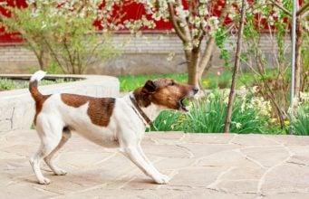 best ways to stop dog barking