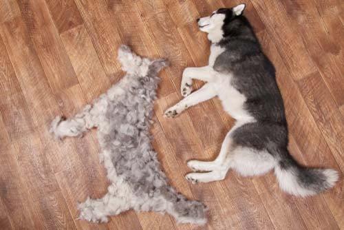 dog laying next to dog hair