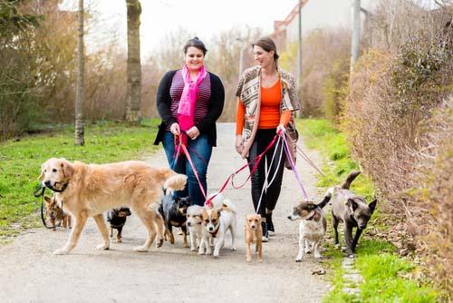 dog walker in park