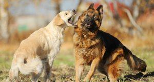 safe ways to break up a dog fight