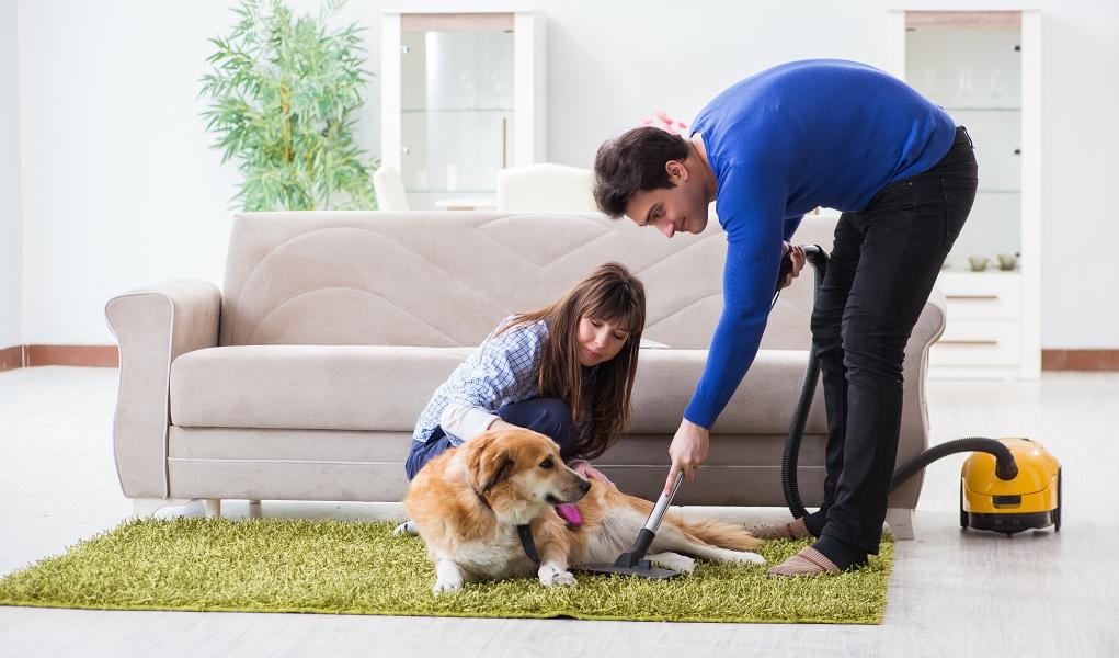vacuuming fleas