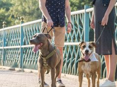 Best Places Single Dog-Owners to Meet a Better Half